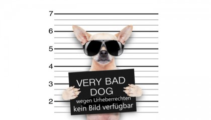 photodune-9174532-mugshot-dog-xs